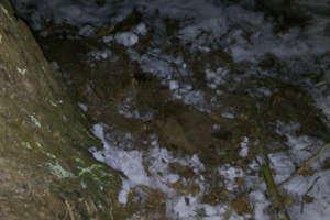 Granat leżał pod drzewem