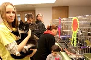 Trzecia Elbląska Rewia Kotów już w niedzielę