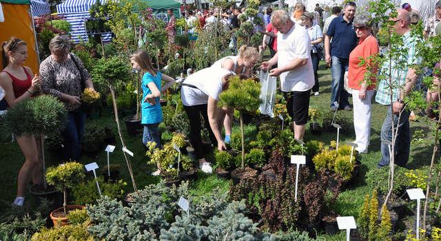 Wiosenne Targi Ogrodnicze w Starym Polu zawsze cieszą się dużym zainteresowaniem  - full image
