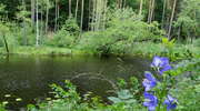 Las w poetyckim ujęciu