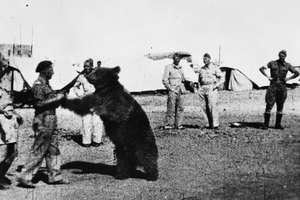 Kapral Wojtek. Niedźwiedź, który był żołnierzem