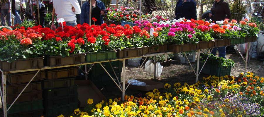 """Wiosenne Targi Ogrodnicze """"Pamiętajcie o ogrodach"""" po raz pierwszy zostały zorganizowane w 2009 roku"""