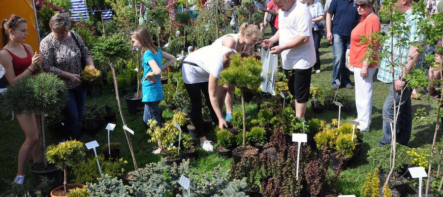 Wiosenne Targi Ogrodnicze w Starym Polu zawsze cieszą się dużym zainteresowaniem