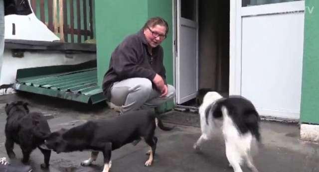 Dom spokojnej starości dla psów - full image