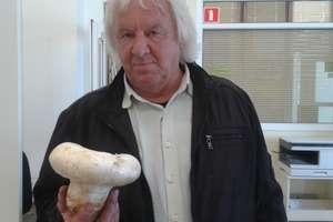 Spacerował po Modrzewinie... W pół godziny nazbierał trzy kilogramy grzybów