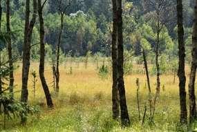 Rezerwat Przyrody Galwica