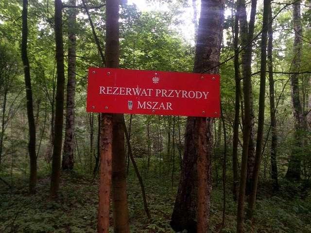 Rezerwat przyrody Mszar w Olsztynie - full image