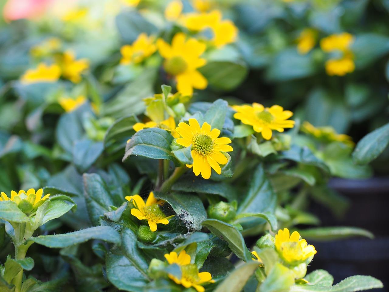 Kwiaty Na Twoj Balkon Dom
