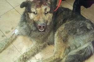 Ogłuszył psa siekierą i zakopał go żywcem. Policjanci uratowali zwierzę
