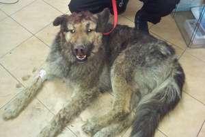 Uratował żywcem zakopanego psa. Teraz weźmie go do domu