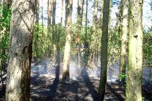 Strażacy przestrzegają przed suszą w lasach