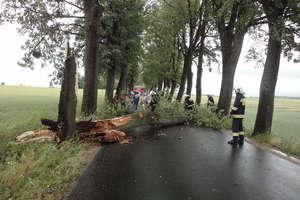 Spróchniałe, powalone na drogę drzewo usuwali strażacy