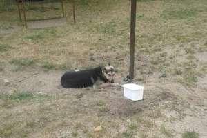 Właściciel po raz drugi porzucił swojego psa