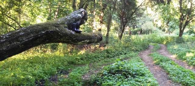 Niespodzianka na ścieżce biegnącej przy jeziorze Linowskim