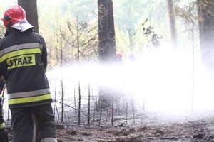 Pracowity wtorek u strażaków. Połamane drzewa i pożar lasu