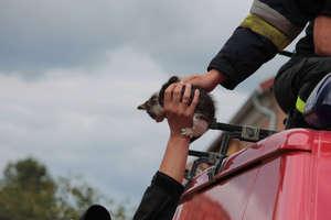 Kota-dachowca uratowali strażacy