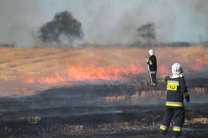 Strażacy walczyli z pożarem rżyska