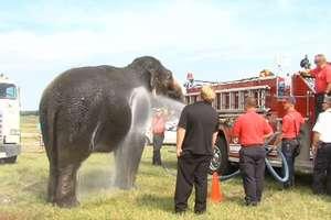 Do ochłodzenia 3 słoni zużyto około 1892 litrów wody. Użyto do tego wozu strażackiego