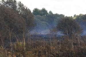 Sygnał czytelnika. Pożar torfowiska na łąkach przy Działdówce