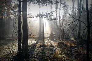 Sezon grzybowy rozpoczęty. Ogromny prawdziwek rósł w podnidzickim lesie