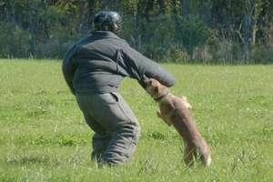 """""""Grom... łap bandytę"""". Policyjne psy przeszły sprawdzian umiejętności"""