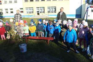 Święto Drzewa w przedszkolu