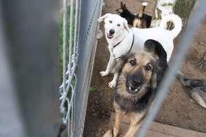 Schronisko dla zwierząt potrzebuje wolontariuszy