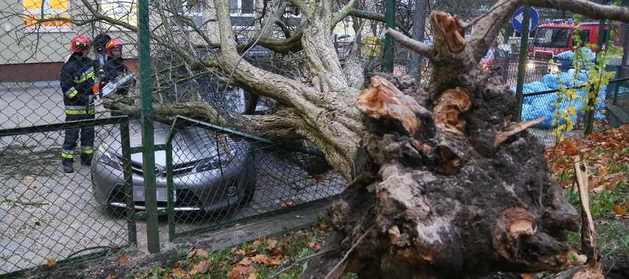 Po wichurze na początku listopada drzewo spadło na toyotę zaparkowaną przy ul. Żołnierskiej