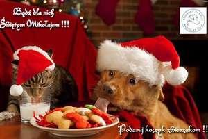 Podaruj święta zwierzakom ze schroniska w Lubajnach