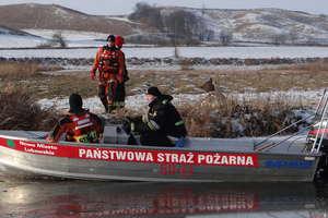 Strażacy i policjanci ratowali jelenie, które wpadły do Drwęcy