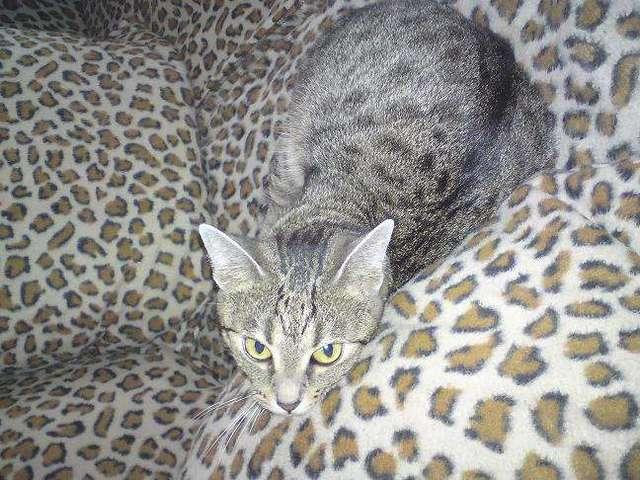 Dziś święto kotów. Pochwal się swoim pupilem! - full image