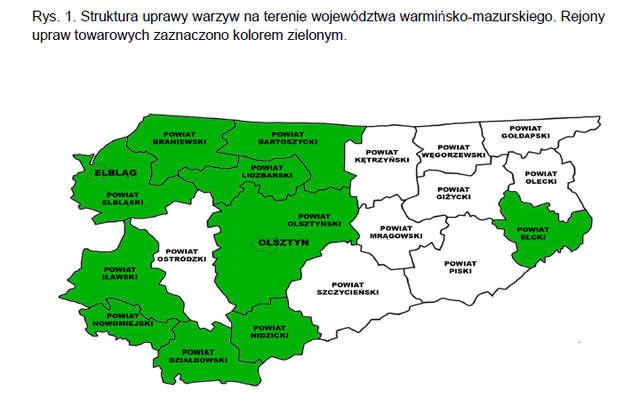 Struktura uprawy warzyw na terenie województwa warmińsko-mazurskiego. Rejony upraw towarowych zaznaczono kolorem zielonym.