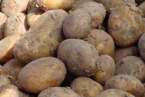 Ziemniaki są coraz droższe. Czasem nawet o 28 proc.