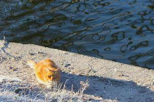 Sterylizacja i kastracja kotów wolno żyjących