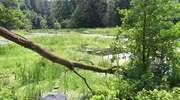 Las też ma swoje święto. Sprawdź, jak o niego zadbać