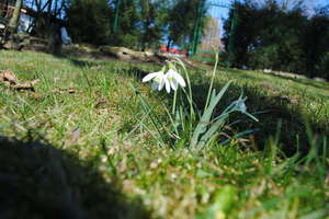 Pierwsze oznaki wiosny w Olsztynie i regionie. Zobacz zdjęcia czytelników!