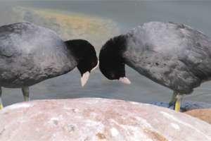 W Spytkowie o ptakach na Mazurach