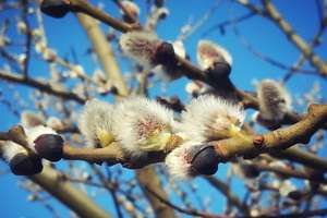 Wiosna w obiektywie naszych czytelników. A ty co zaobserwowałeś?