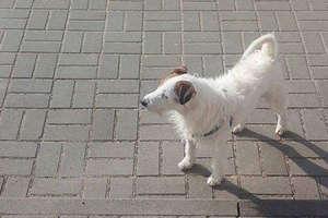 Przygarnęła psa i dzięki nam znalazł się jego właściciel