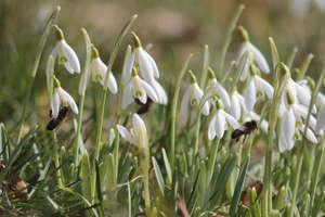 Pierwsze oznaki wiosny na Warmii i Mazurach! Ponad 60 waszych zdjęć w galerii. Czekamy na więcej!