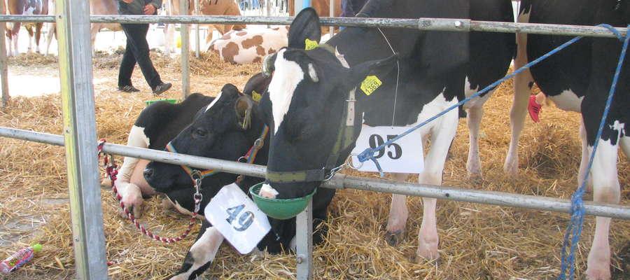 O rozłożenie kar za nadprodukcję mleka wnioskowało 30,5 tys. rolników, a w sumie limit przekroczyło ok. 63,5 tys. producentów mleka. Nałożona na Polskę kara wyniosła 161,5 mln euro (ok. 660 mln zł). Za każdy ponadlimitowy litr mleka rolnik musiał zapłacić