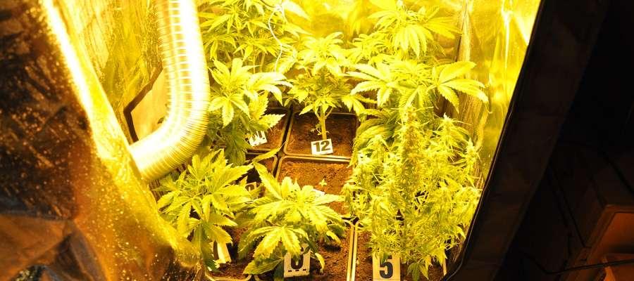 Rośliny zabezpieczone w domu 19-latka