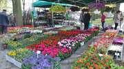 Wybierz się na VII Wiosenne Targi Ogrodnicze