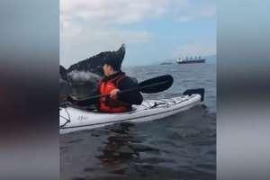 Ogon wieloryba prawie przewrócił jego kajak