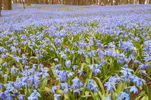 Wiosna na Warmii i Mazurach. Kolejne zdjęcia naszych czytelników