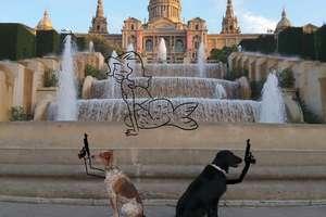 Xperią X zrobił ciekawe zdjęcia psów