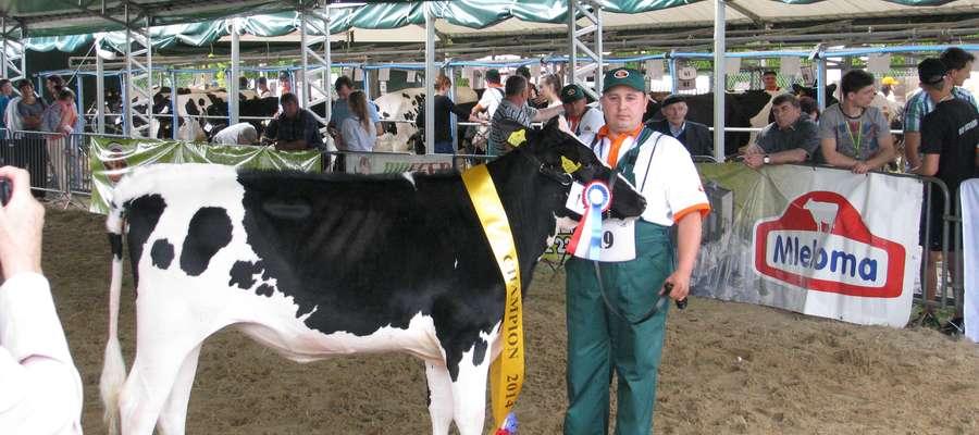 """Podczas """"Święta Mleka"""" hodowcy zaprezentują najpiękniejsze okazy bydła mlecznego"""