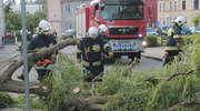 W Lubawie silny wiatr powalił drzewa