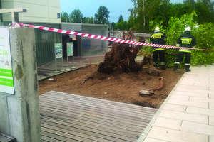 Drzewo spadło na szynobus, wiatr zmiótł stodołę z powierzchni ziemi. Nawałnica na Warmii i Mazurach