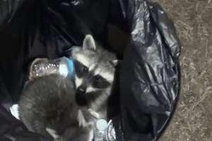 Szopy utknęły w koszu ma śmieci